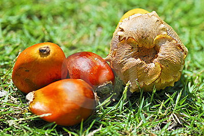 Oil Palm Seed Series 02
