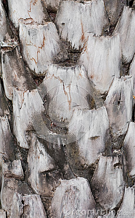 Free Oil Palm Tree Bark Stock Photography - 30080272