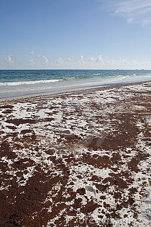 Oil Spill on the Beach June 2010