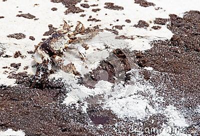 Oil washes ashore in Pensacola Beach Editorial Photo