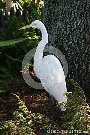 Oiseau blanc parmi des centrales