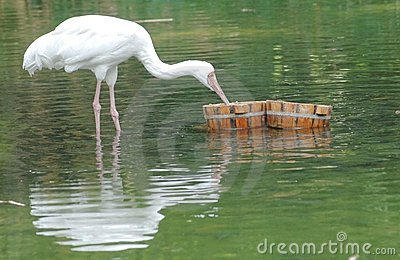 Oiseau dans le lac