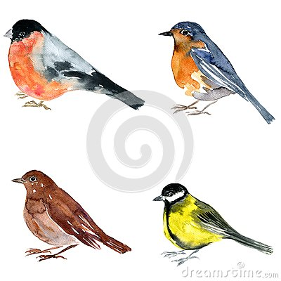 Oiseau de dessin d 39 aquarelle illustration stock image - Dessin d oiseau ...