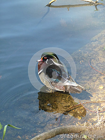 Oiseau de lac