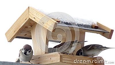 Oiseaux dans la République Tchèque banque de vidéos