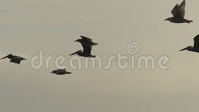 Oiseaux de mer volant au-dessus de l'océan dans le mouvement lent