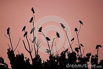 Oiseaux sur des buissons