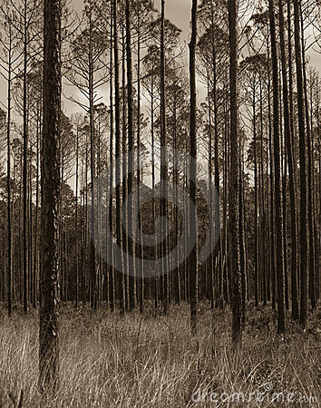 Okefenokee wildlife refuge after the fire