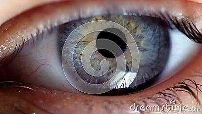Oko drga nerwowo zbiory wideo