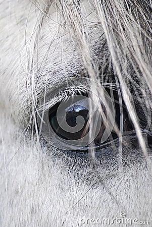 Oko koń