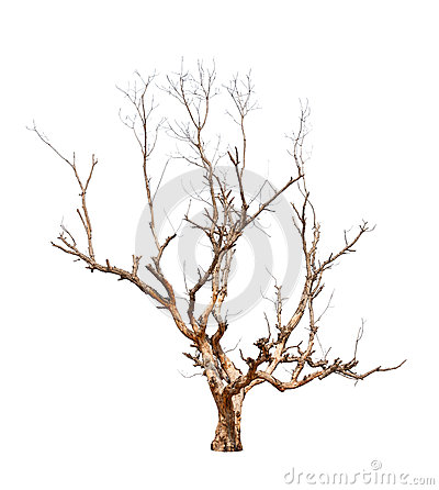 Free Old And Dead Tree Royalty Free Stock Photography - 30242367
