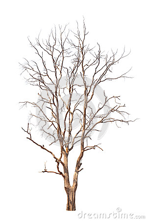 Free Old And Dead Tree Royalty Free Stock Images - 30251029