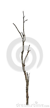 Free Old And Dead Tree. Stock Image - 31492851