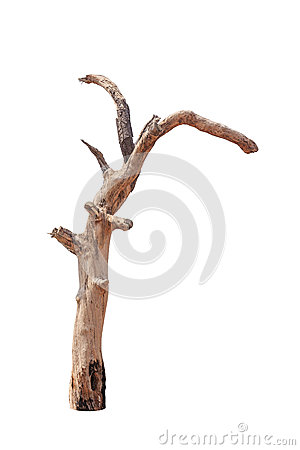 Free Old And Dead Tree Stock Images - 31946604