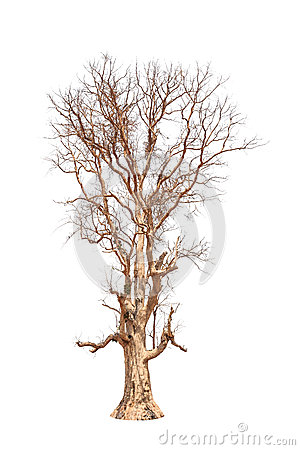Free Old And Dead Tree Stock Photo - 31946620