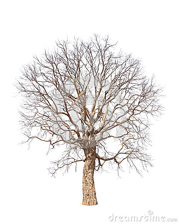 Free Old And Dead Tree Stock Photos - 31946663