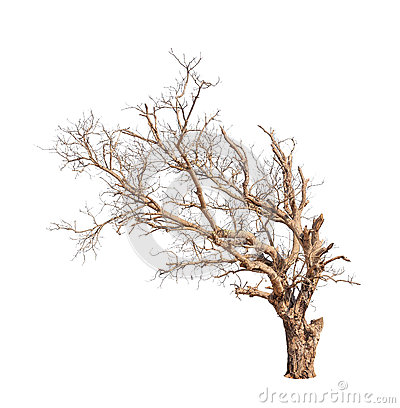 Free Old And Dead Tree Stock Photo - 31946670