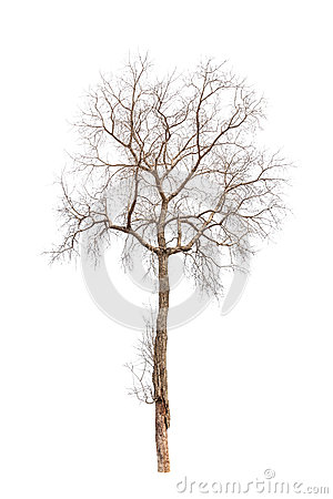 Free Old And Dead Tree Royalty Free Stock Photography - 31946697