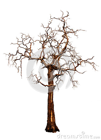 Free Old And Dead Tree Isolated Stock Images - 31128064