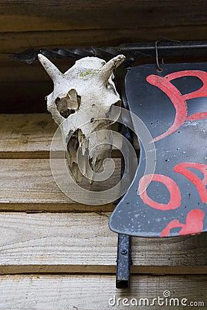 Old animal skull