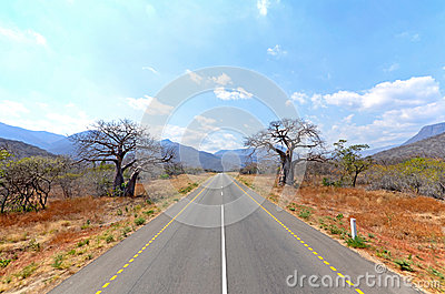 Old Baobab Trees along straight road
