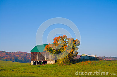 Old Barn in a Field