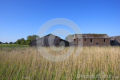 Old barns and reed beds