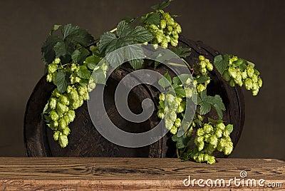 Old barrel with hops