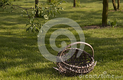 Old basket in orchard