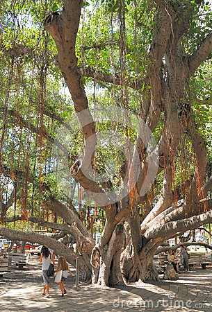 Old Bayan Tree Editorial Stock Photo