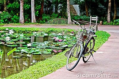 Old bicycle beside lotus pond