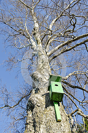 Free Old Bird Nesting Box On Birch Tree In Spring Stock Images - 35399784