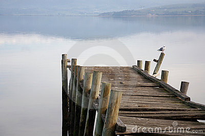 Old broken pier with seagull
