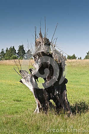 Old burnt tree on grassland