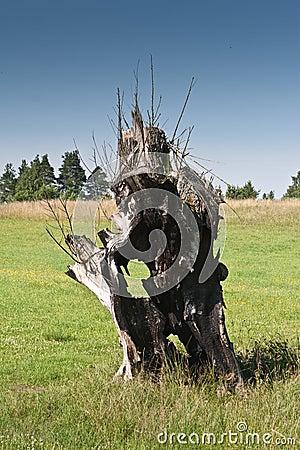 Old burnt tree on grassland