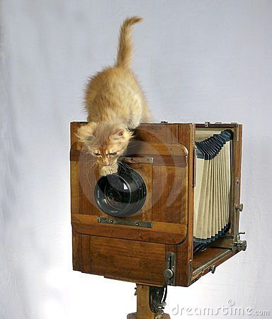 Old camera and red kitten