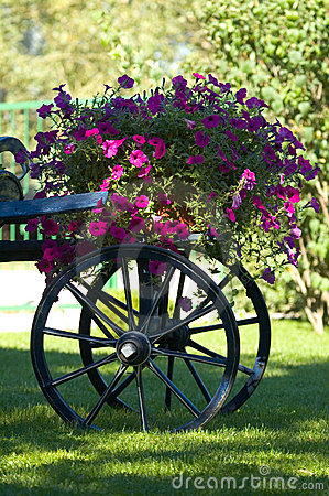 Old cart of flowers