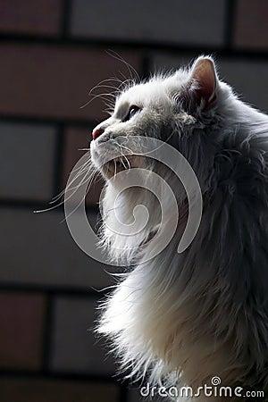 Old cat.