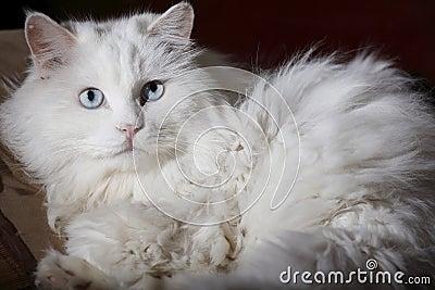 Old cat s portrait