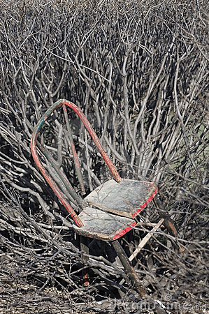 Old Chair in Thicket