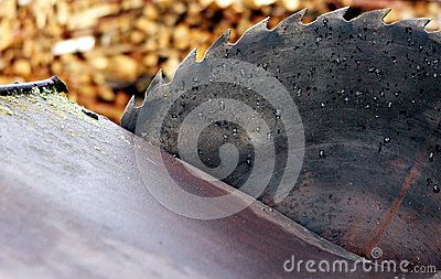 Old circular saw blade and wood logs background