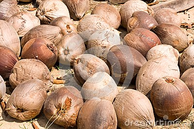 Old coconuts