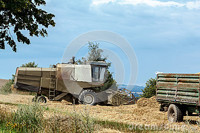 Old combine on field harvesting gold wheat