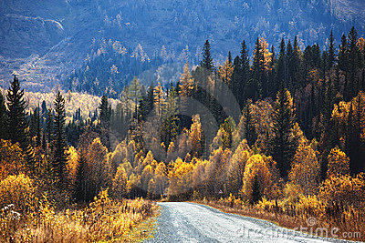 Old country road in autumn mountain forest