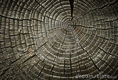 Old cracked wood rings.
