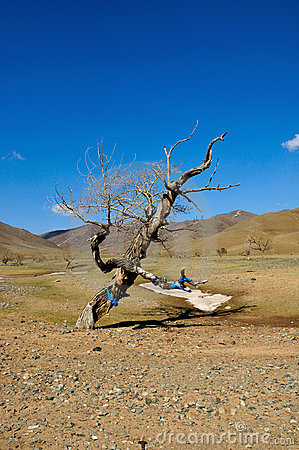 Old dead tree in Gobi Desert