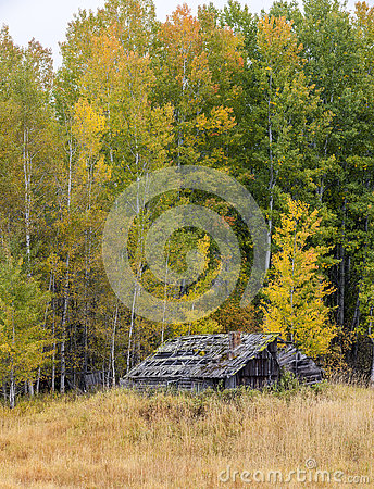 Free Old Decrepit Shed In Autumn. Royalty Free Stock Photography - 78624037