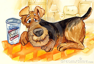 Old dog with set of false teeth
