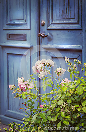Free Old Door And Rosebush Stock Image - 65679531