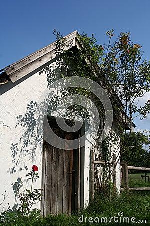Old door with red rose